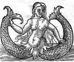 two-tailed-mermaid