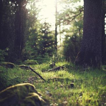 Caminho de luz entre a natureza
